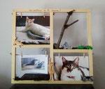 cadre photo en bois personnalisé pour les animaux de la maison, avec photos des animaux et décors en bois, branches et mousse végétale