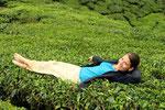 in Teeplantagen (Cameron Highlands)