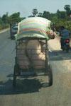 Schweinetransport (Dach beachten!)