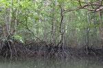 Mangrovenwälder bei Krabi