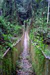 Dschungelbrücke wie aus Indiana Jones (Tamang Negara)