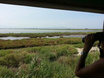 Im Naturschutzgebiet auf dem Ebrodelta