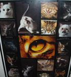Katzen -  Maße: 40 x 50cm    Bilderrahmen verglast, schwarzes Plastik.  25€