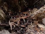 Im Innern eines Baumstamms