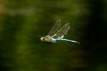 er fliegt mit 50 km/std übers Wasser und beobachtet dabei alles