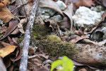 Ameisen im Dschungel