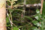 Spinne im Dschungel
