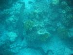 zwei freischwimmende Muränen Höhe Bungalow 33