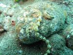 Muck-Diving Botanta