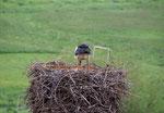 Vermutlich werden die Eier gedreht (Foto: Agnes Schulz)