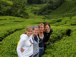 Our tour of the tea plantations