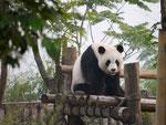 Chengdu Panda Conservation Centre