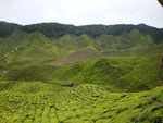 Gorgeous view of the plantations while we sipped tea at the tea shop!