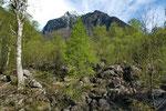 Auwald-Lebensraum in der Südschweiz