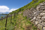 Lebensraum der Mauereidechse am Jurasüdfuss