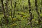 Lebensraum von Alpenviper, Äskulapnatter, Smaragdeidechse und Feuersalamander