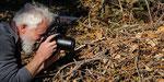 Ein Vipernmännchen kriecht neugierig auf mich zu... (Foto: B. Herren)