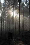 Nebel im Wald, Lommiswil