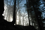 Nebel, Schauenburg
