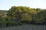 Δέντρο στο φως
