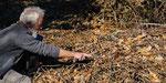 Ein nach einem Weibchen suchendes Vipernmännchen nähert sich neugierig meinem Finger (Foto: B. Herren)