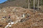 Neue Stein- und Asthaufen für Schlingnatter und Aspisviper, Kanton Bern