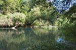 Lebensraum der Ringelnatter im Berner Mittelland