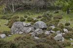 Lebensraum von Smaragd- und Mauereidechse