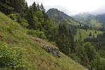 Magerrasen in den Freiburger Alpen