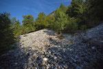 Lebensraum der Aspisviper im Jura