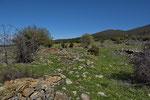 Reptilienhabitat in der Umgebung Thessalonikis