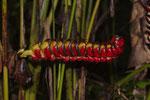 Formen- und Farbenvielfalt im Regenwald