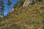 Lichtungsschlag zur Aufwertung eines Reptilienhabitats, Kanton Solothurn