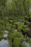 Feuersalamander-Habitat