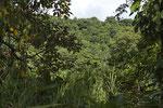 Regenwald an der Pazifikküste