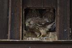 12. Juli: Das Nesthäkchen