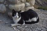 Μια άλλη γάτα...