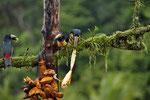 Bananenverschlingende Ungeheuer ;-)