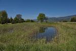 Amphibien-Laichgewässer, Kanton Solothurn