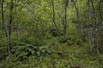 Feuchter Auwald in den Tessiner Bergen