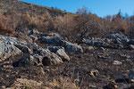 Verbranntes Buschland