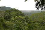 Trockenregenwald, Parque Nacional Santa Rosa, Guanacaste