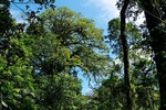 Urwaldriese, Refugio de Vida Silvestre Gandoca-Manzanillo