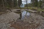 Neues Amphibien-Laichgewässer in einem Auwaldgebiet, Kanton Bern