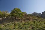 Landschaft im Süden Samothrakis