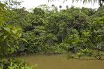 Altwasser im Regenwald