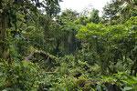 Bergregenwald, Reserva Santa Elena, Monteverde