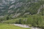 Lebensraum von Smaragdeidechse, Mauereidechse und mehreren Schlangenarten in den Tessiner Bergen