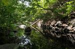Ojo de Agua, Quelltümpel im Trockenwald, Parque Nacional Santa Rosa, Guanacaste