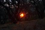 Sonnenuntergang zwischen Olivenbäumen